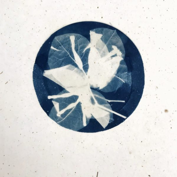 Easy Cyanotype with Brenna Hansen